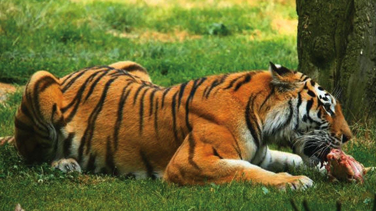 Bài 10. Dạy bé các hành động và học tên con vật