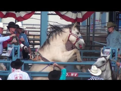 Bloody Reno Rodeo Horse Bucked in Spite of Injury
