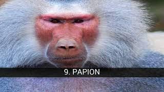 Types de singes, des primates et des singes