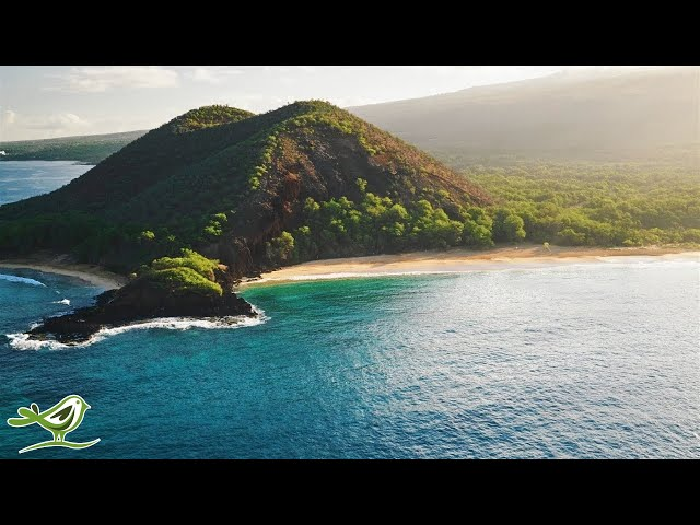 Relaxing Music with Beautiful Nature - Peaceful Piano & Guitar Music by Soothing Relaxation