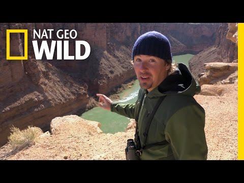 Casey And The Condor   America The Wild