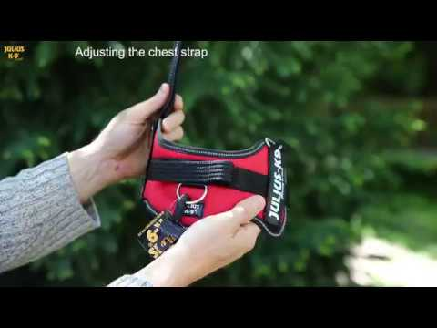 How to fit a Julius-K9® dog harness, made in EU