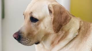 Полировка шерсти собаки Советы по уходу за собакой Щетки Ferplast Premium Ферпласт Премиум