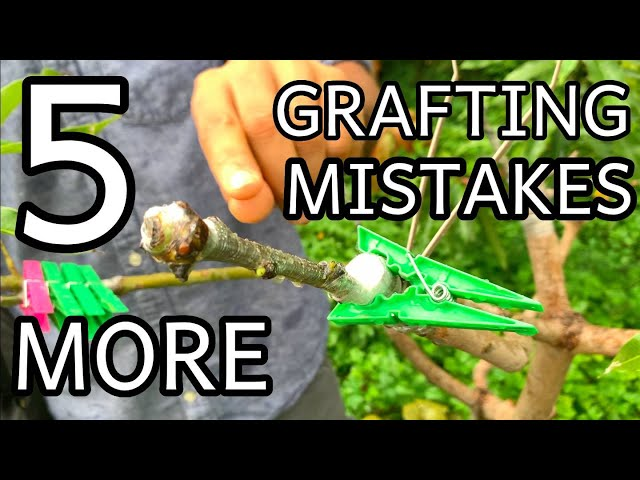 Why do my grafts fail??? 5 More GRAFTING MISTAKES - 1 year later