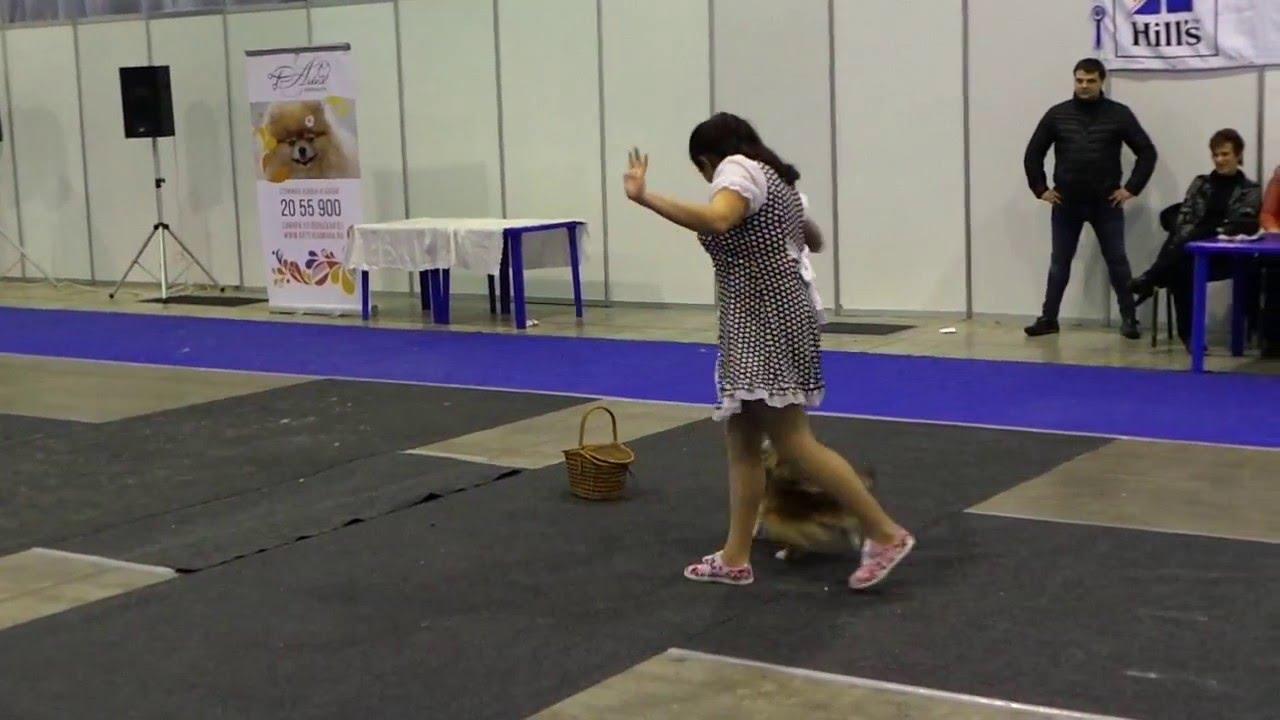 Танцы. Собаки 21 февраля 2016 года ВСЕРОССИЙСКАЯ ВЫСТАВКА ...