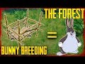 HOW TO BREED RABBITS | The Forest