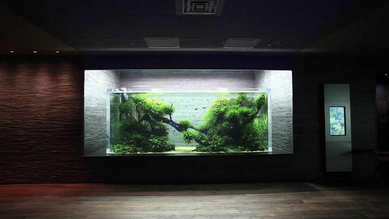Aquascape In Giant Aquarium By Takashi Amano ADA Japan