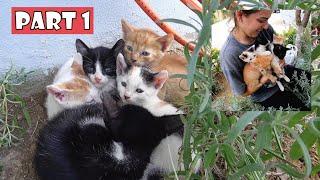 Las madres de los gatitos están desaparecidas desde hace una semana. Debo ser su madre por un tiempo