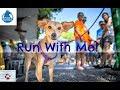 5 cities, 3 continents, 1 race - Penny Marathon 2018