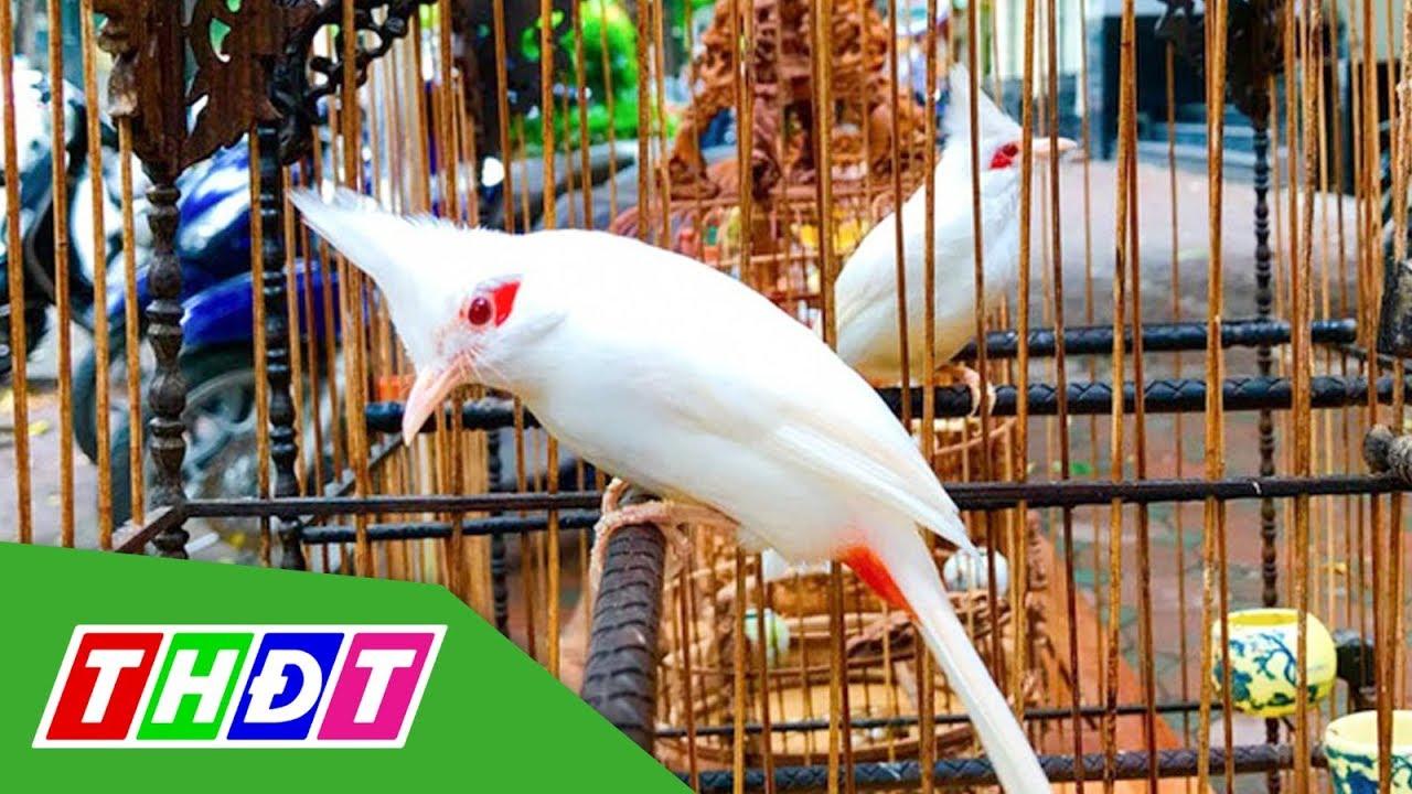 Tìm hiểu về các loại chim cảnh đẹp được ưa chuộng nhất hiện nay | THDT