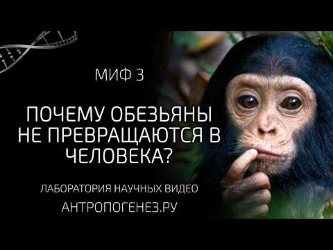 Почему обезьяны не