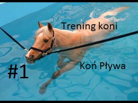 Trening koni #1   Koń Pływa