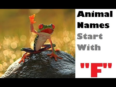 name an animal that starts with the letter n name an animal that starts with the letter quot f quot animal 23738 | hqdefault