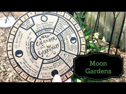 Q&A: All About Moon Gardening