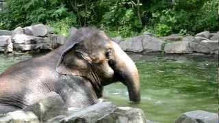 elefant - zaan - заан