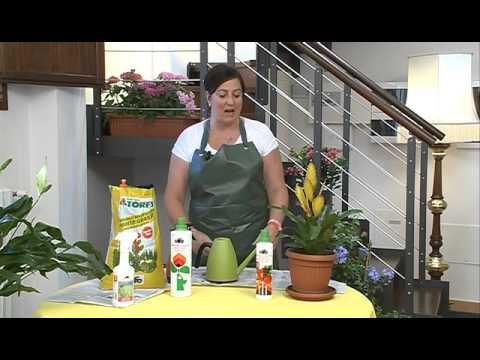 CIFO - Ascolta le tue piante - La Bromelia