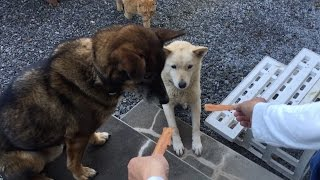 犬のおやつを嗅ぎつけた「ひろし」、近寄ってきましたが、犬の尻尾にビ...