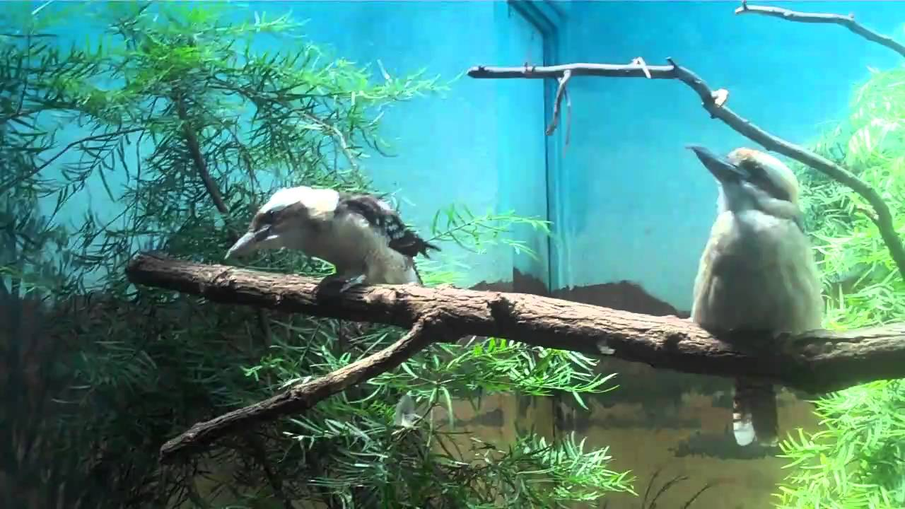 Try Not Laugh Zoo Animals