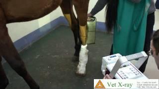 Рентгенография запястья лошади