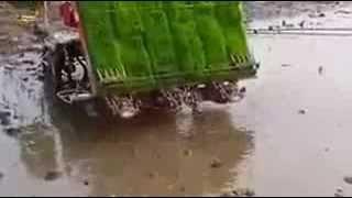 Rice Plantation process