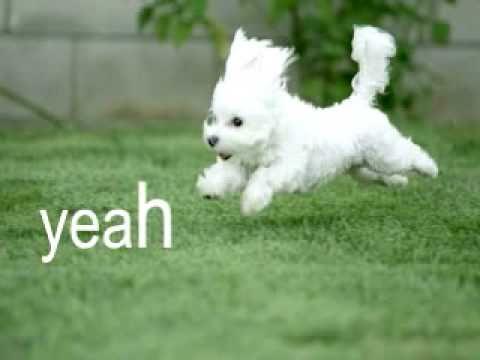 Fuzzy Fuzzy Cute Cute Parry Gripp FULL SONG + Lyrics & Very Cute Photos of Kitties and Doggies!
