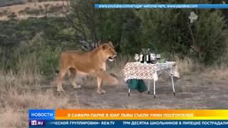 В сафари-парке в ЮАР львы съели ужин посетителей