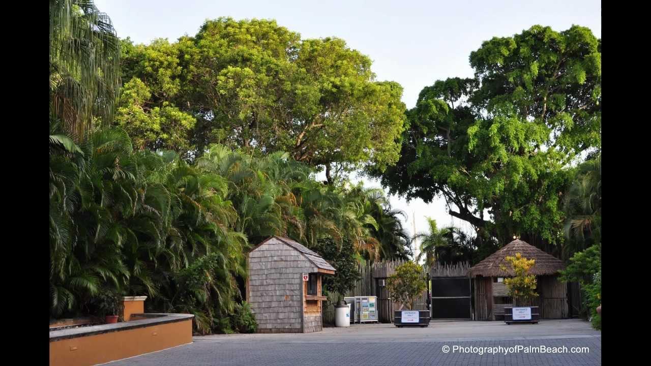 Palm Beach Zoo - Wedding Venue - YouTube