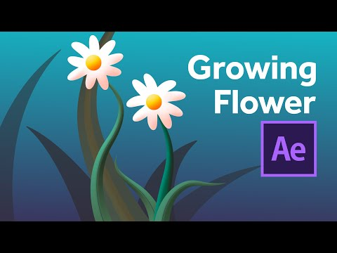 Growing flower animation & creation in After Effects - using tapered shape strokes