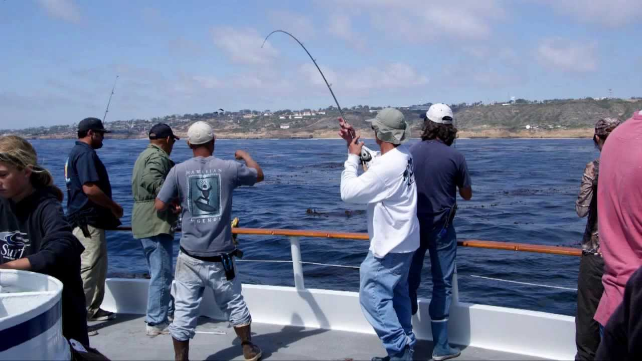 Half day fishing on the dolphin in san diego youtube for Point loma landing fish count