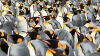 Penguins Falling & Whales Jumping ✔ JANXEN - EXTRARCTICA 1.0 (Oxygene Jarre Vangelis Antarctica) ice