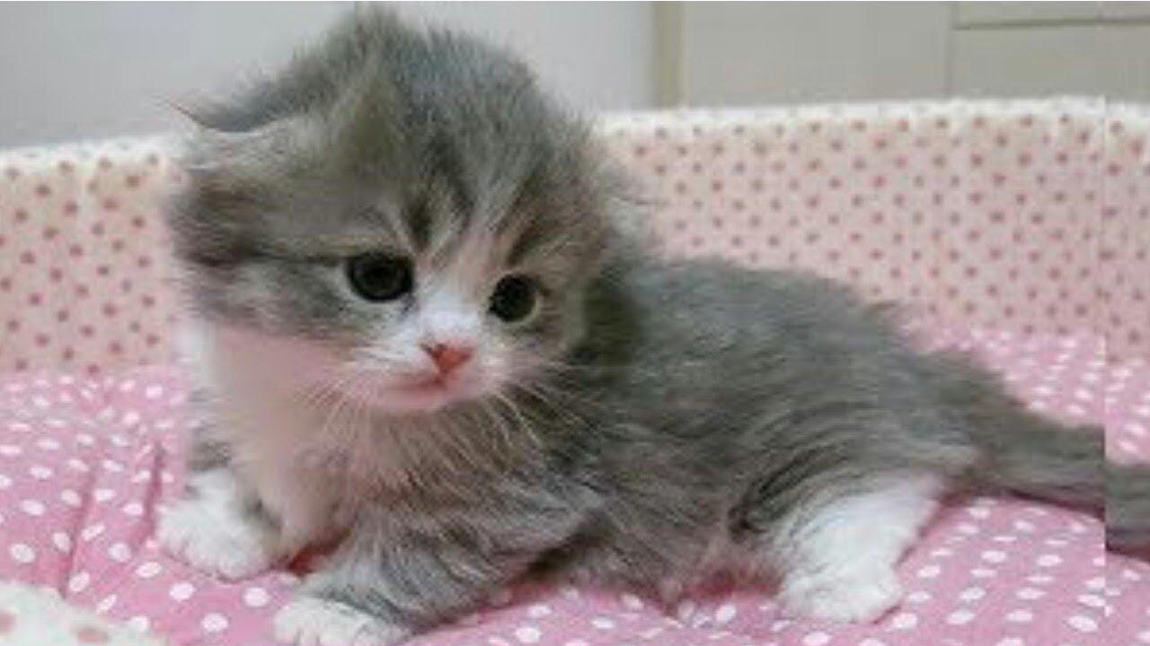 Cute Little Kitten Compilation 2018