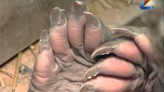 В зоопарке родился 1-ый в России трубкозуб