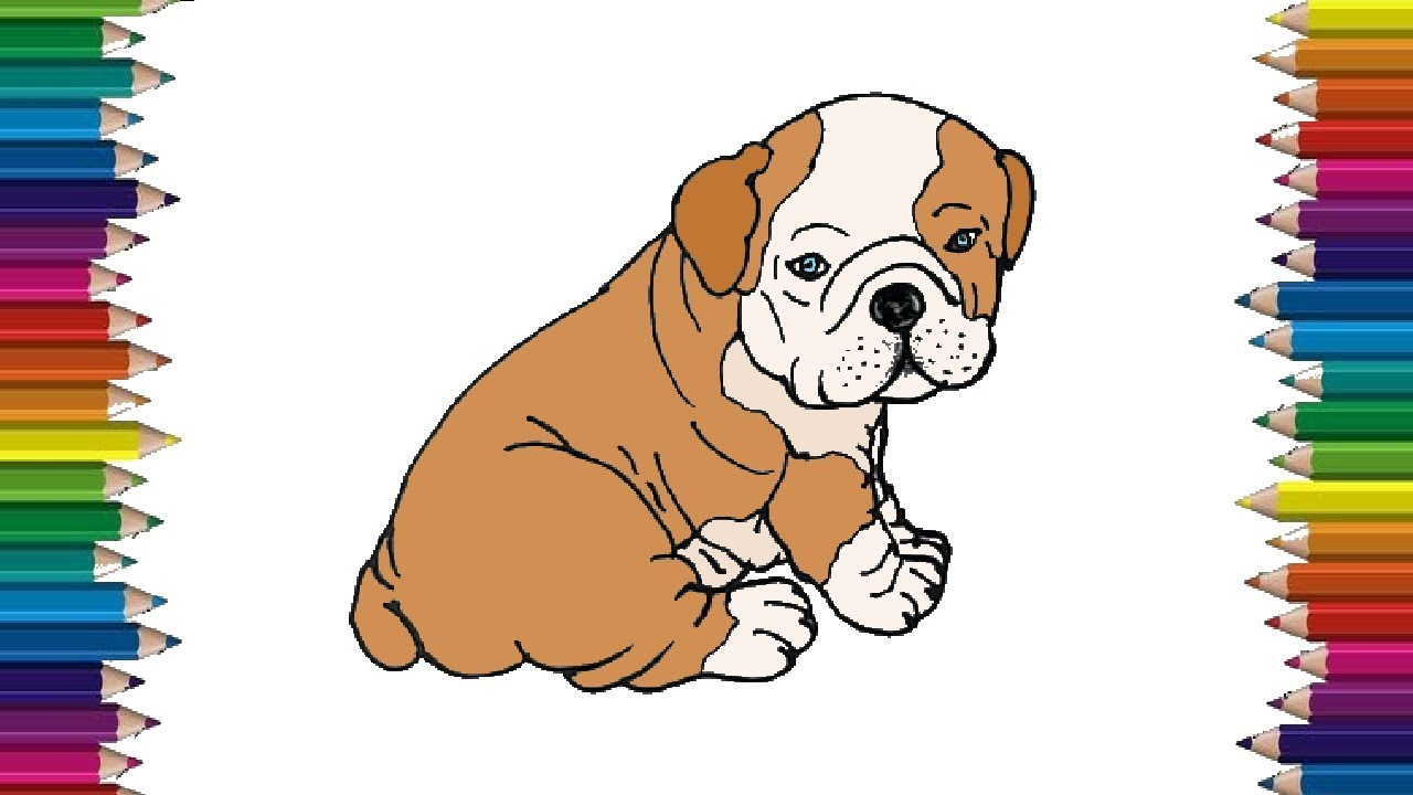 How To Draw A Bulldog Step By Step Cute Puppy Drawing And Coloring Youtube