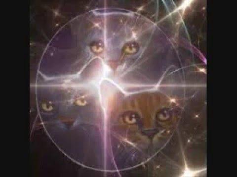 Youtube Worrior Cats Firestare Tripute