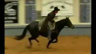 Gambar cover Stacy Westfall 2003 NRHA Futurity Freestyle Bridleless Reining