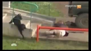 Нападение собаки на людей | Dog attacks on people
