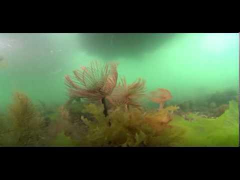 Tide-swept peacock worms - Loch Sween