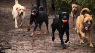 K9 Heaven Nz - 'precious Memoirs Of A Dogs Life' - 19th May - 9th June 2014