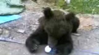 Медведь пришел на месторождение Сургутнефтегаза