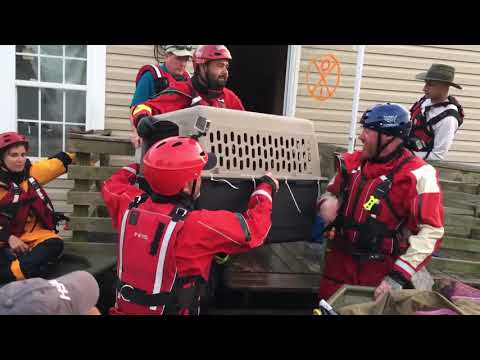 Hurricane Harvey: Animal Rescue Team rescues animals from flooding in Beaumont, TX