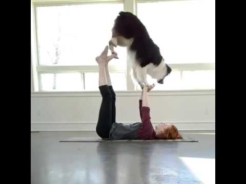 Trust ♥ Practicing a new Doga position! ❤ By  @my aussie gal