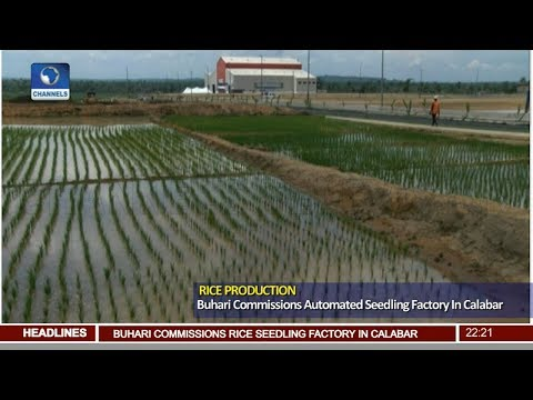 Buhari Commissions Automated Seedling Factory In Calabar Pt.2 |News@10| 26/06/18