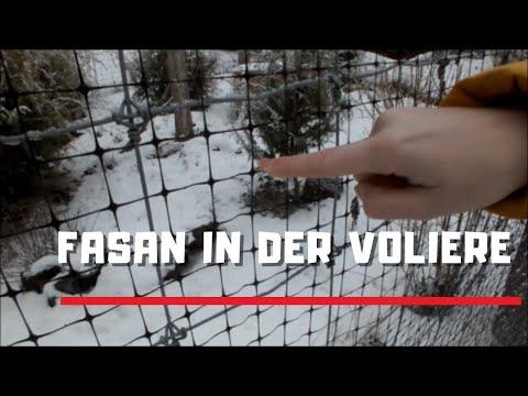 Züchtung von Fasanen auf gesperrten Grundstücken mit Perdix Volierennetz