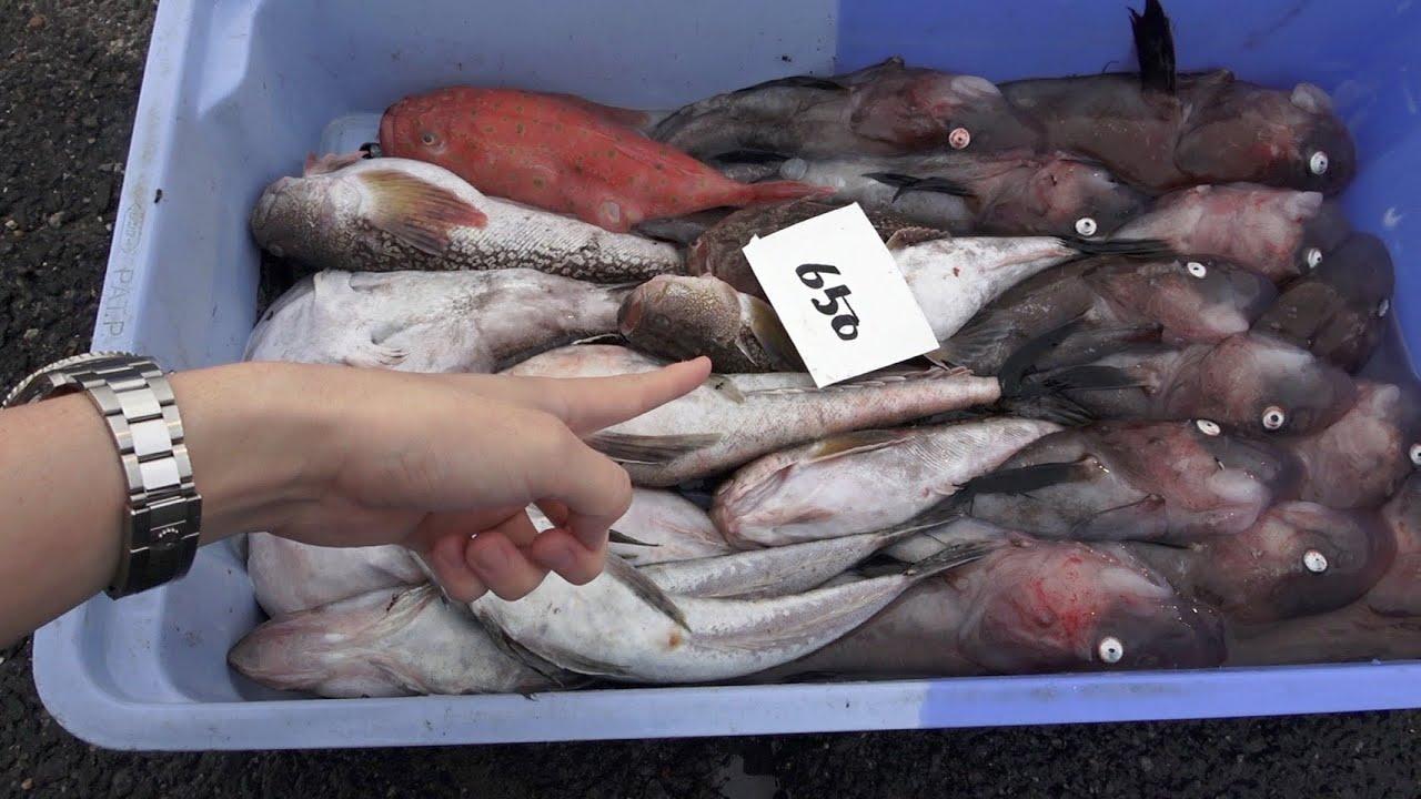 市場の片隅に『650円』でとんでもない魚しか入っていない魚セットが売られていたから即買い