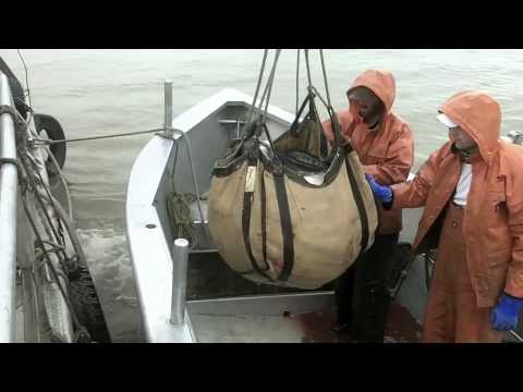 Set net commercial salmon fishing bristol bay for Alaska out of state fishing license