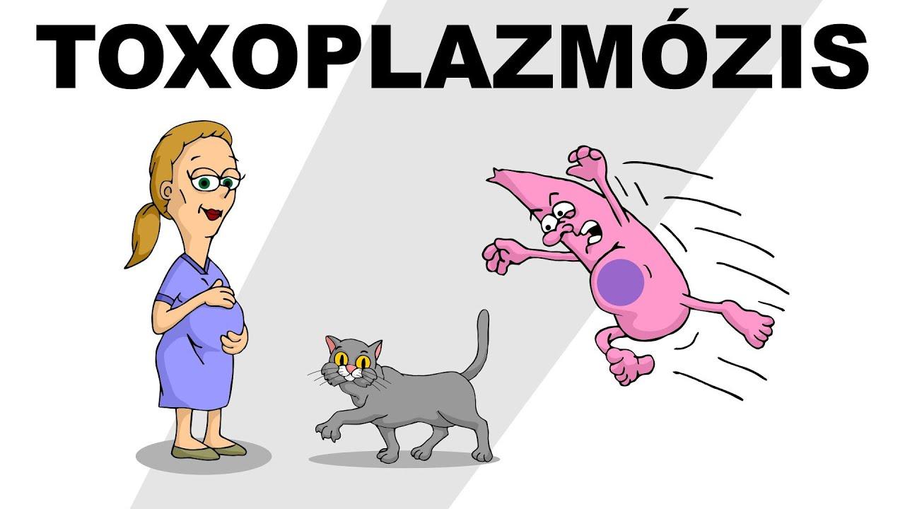 toxoplazma szerelem)
