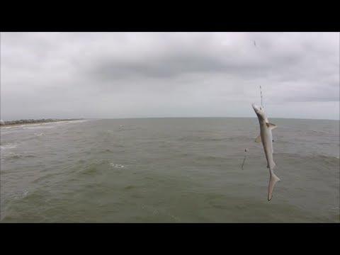 Emerald isle north carolina baby black tip shark caught for Fishing emerald isle nc