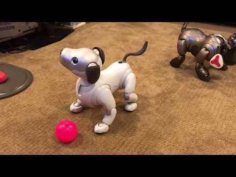 Aibo ERS-1000 Playing With His Ball!