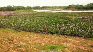 Paraguay Chaco Routa 9 Mariscal Estigarribia Departamento