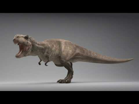 T-Rex Animations